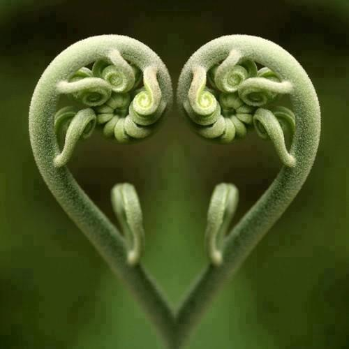 heart sprout